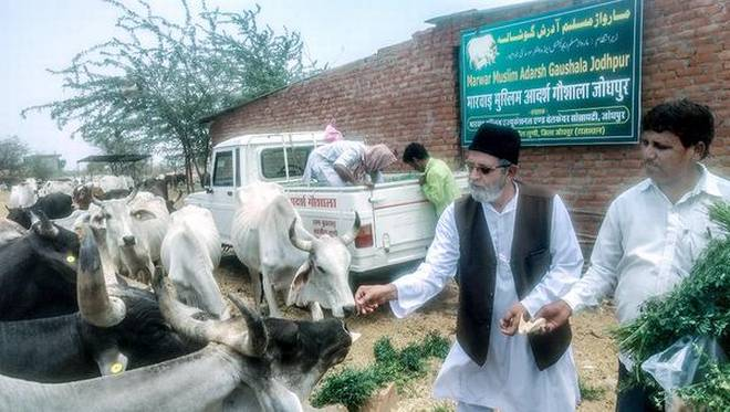 MMEWS general secretary Mohammed Atique with the cows at the gaushala